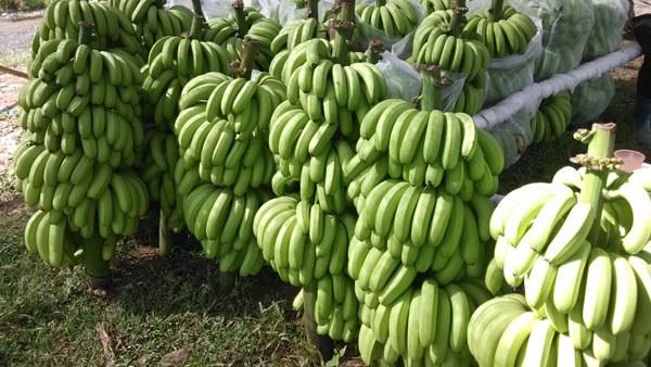 海南3月上市水果大集合,你都吃过吗?
