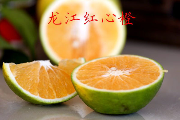 白沙红心橙(龙江红心橙)