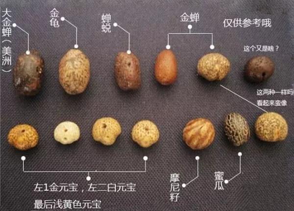 元宝籽、金蟾籽、摩尼籽的区别