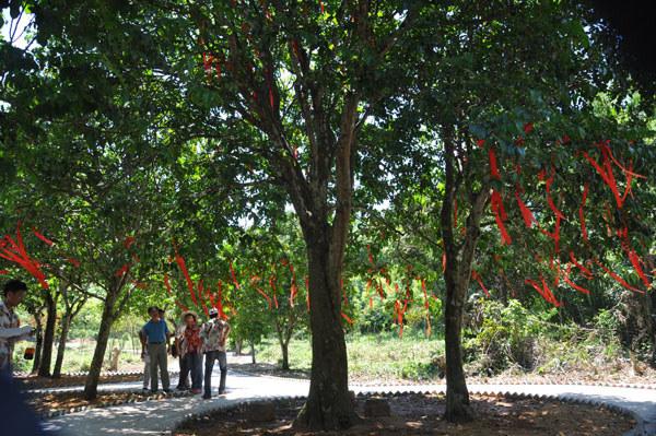 南吉村·百年黄皮树