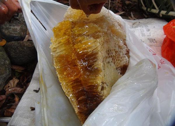 新鲜采摘的排蜂蜜