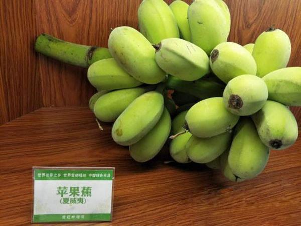香蕉产业研讨会展示的香蕉品种
