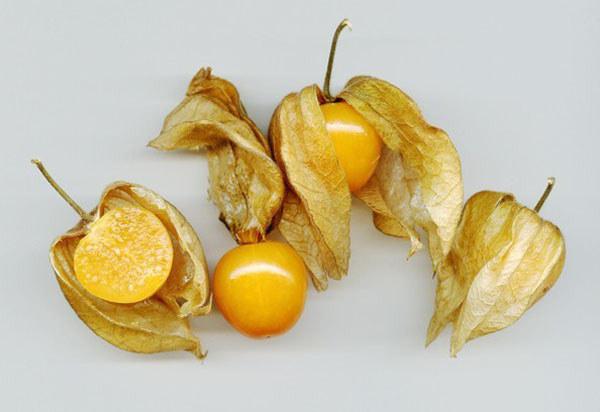成熟的灯笼果