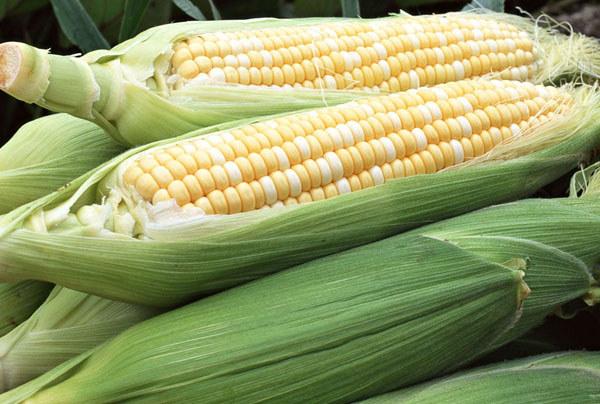 东方甜玉米