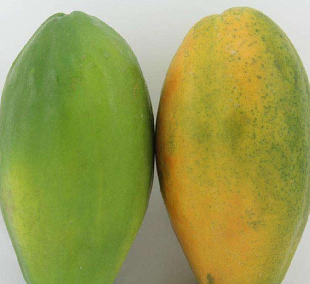 青木瓜与水果木瓜