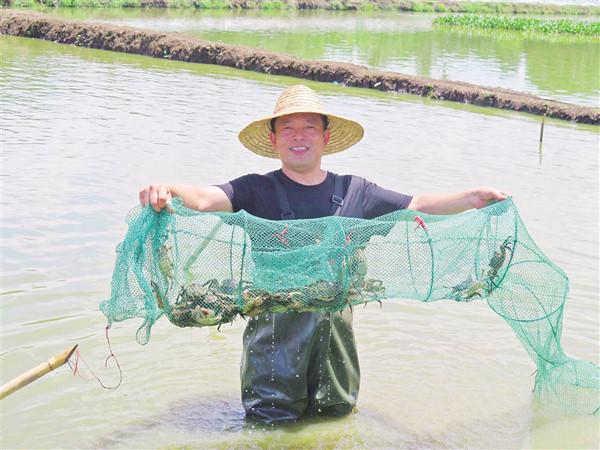 南金农场生态大闸蟹试点养殖获得成功