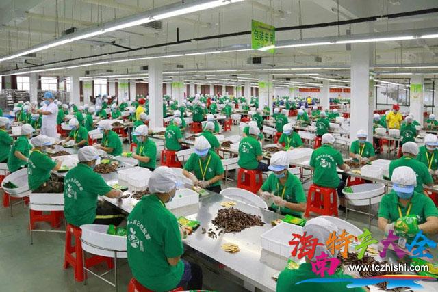 万宁槟榔厂