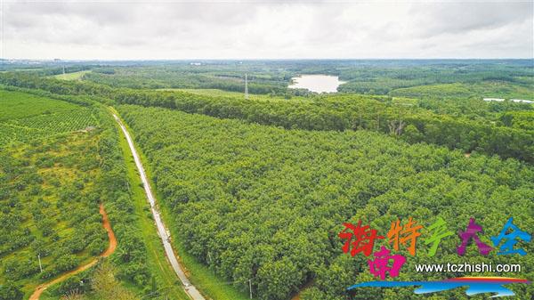 澄迈县山口青柚种植基地