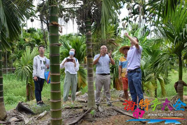 崖州区农业农村局技术人员查看槟榔防治效果