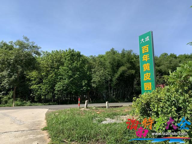 儋州百年黄皮园入口