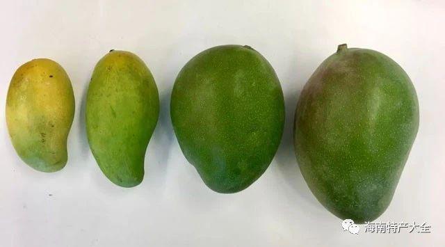大芒果和小芒果