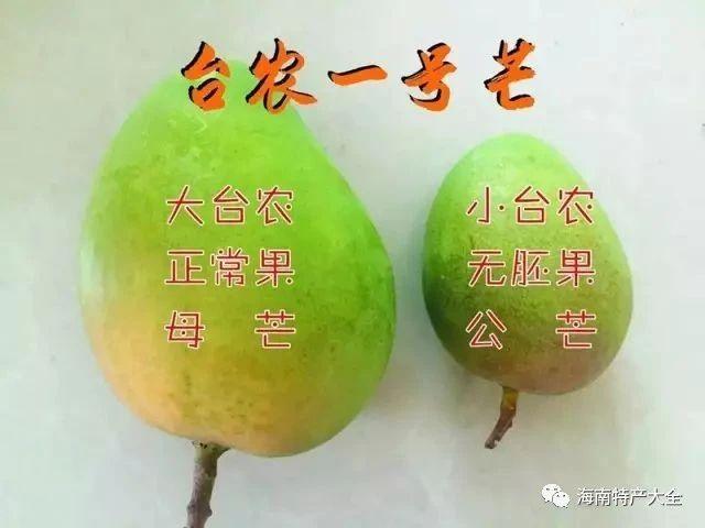 公芒果和母芒果