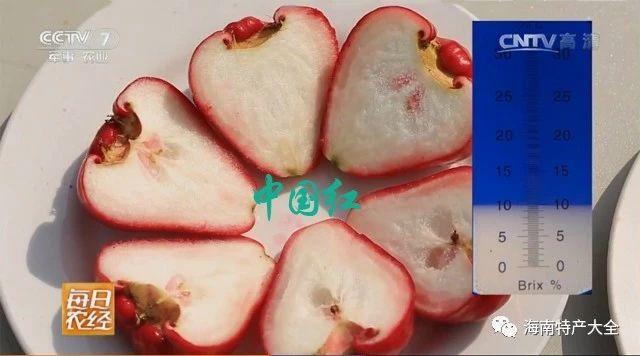 中国红莲雾含糖量