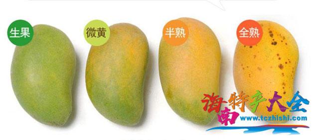 芒果成熟度判断