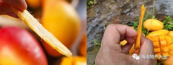 贵妃芒与台农芒的果核对比