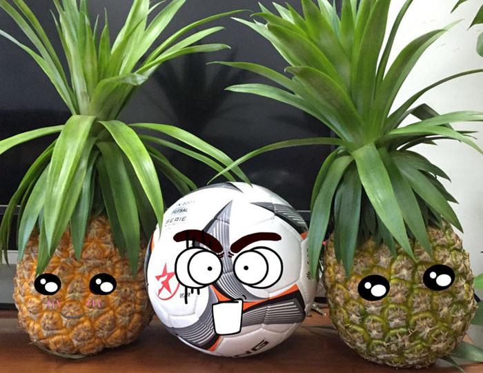 琼台一号菠萝