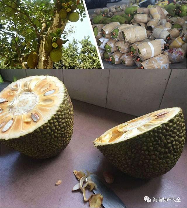 泰国红肉菠萝蜜