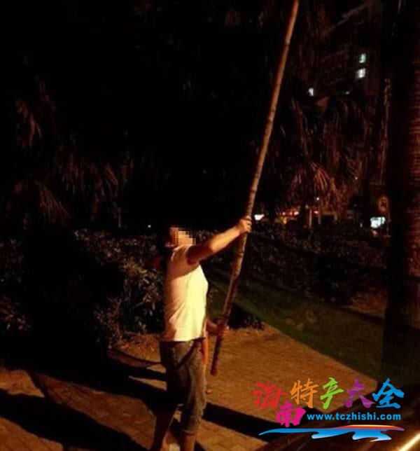 海口一女子偷摘椰子被抓