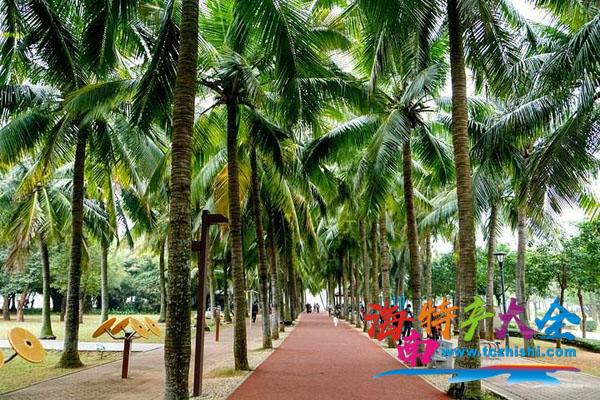 公园里的椰子树
