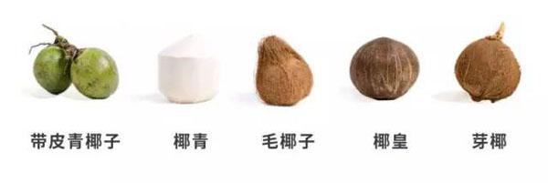 椰子的品类