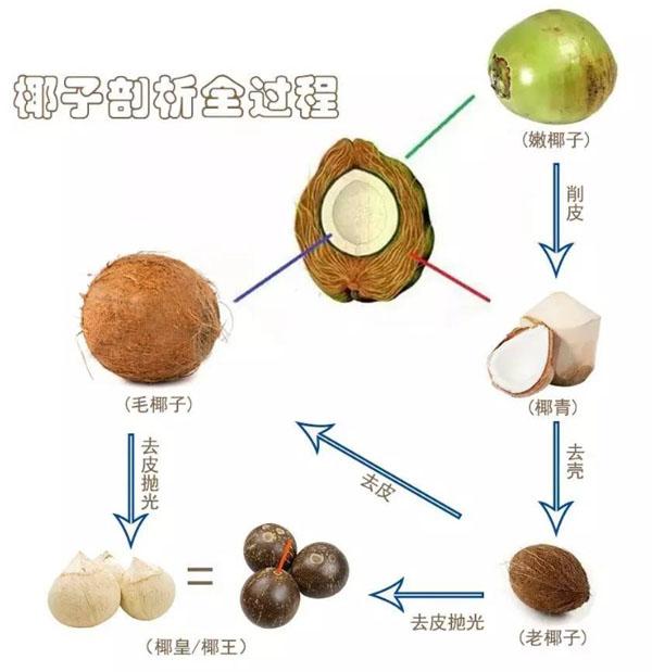 椰子剖析全过程