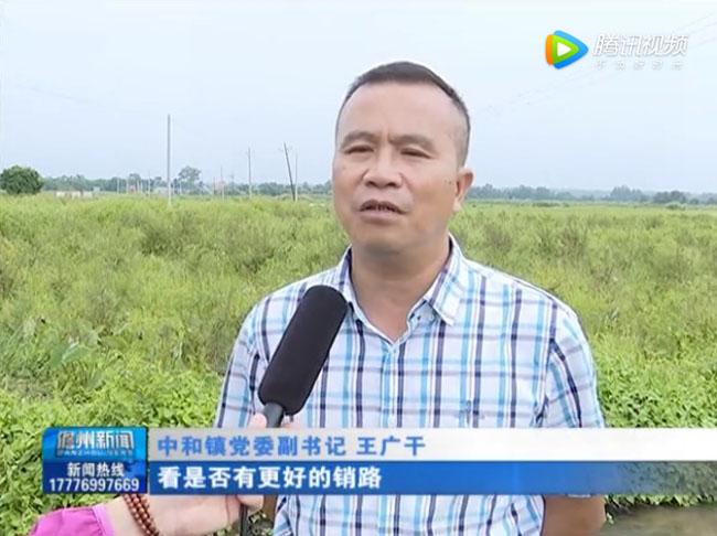儋州市中和镇党委副书记王广干